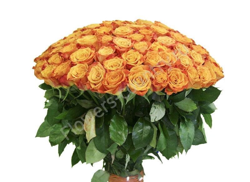 Букет из 101 оранжевой розы циркус