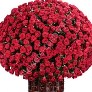 Букет 501 роза