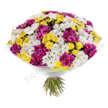 Букет из 51 разноцветной хризантемы