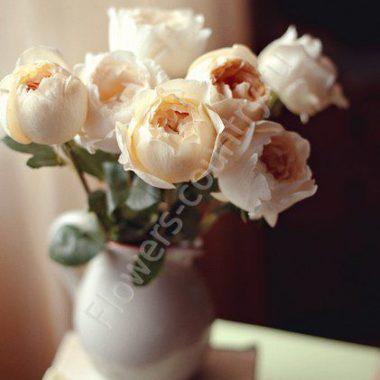 Пионовидная роза оптом
