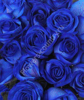 Синие розы оптом