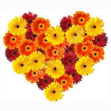 Букет из разноцветных гербер в форме сердца
