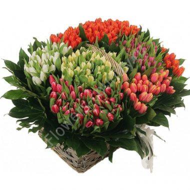 Букет из 351 тюльпана микс в корзине