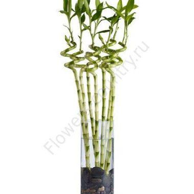 Бамбук декоративный-100см.