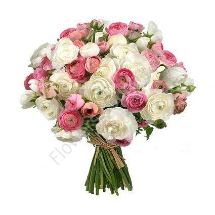 Букет из 49 белых и розовых ранункулюсов