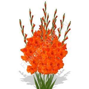 Букет из оранжевых гладиолусов