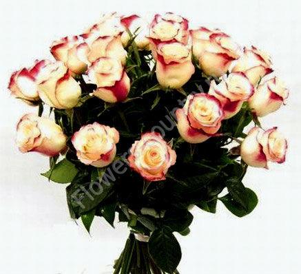 Букет из красно-белых роз «Свитнесс»
