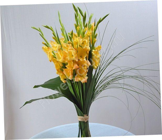 Букет из желтых гладиолусов