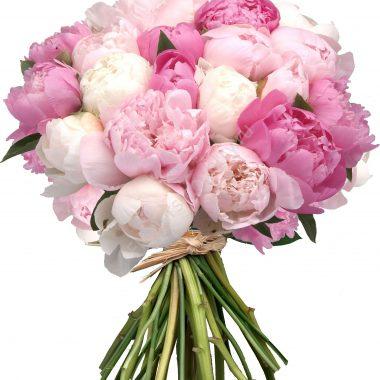 Букет из 35 белых и розовых пионов