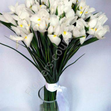 Белый ирис