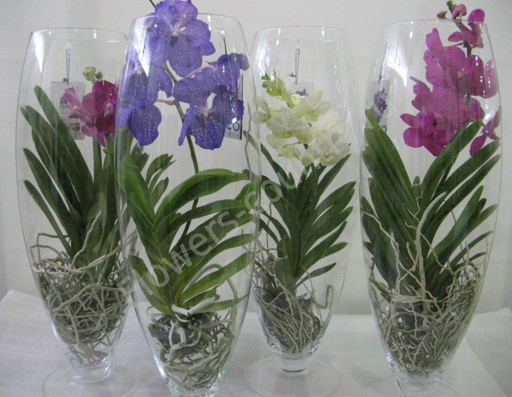 Орхидея ванда в вазе