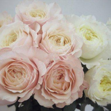 Пионовидная роза дешево