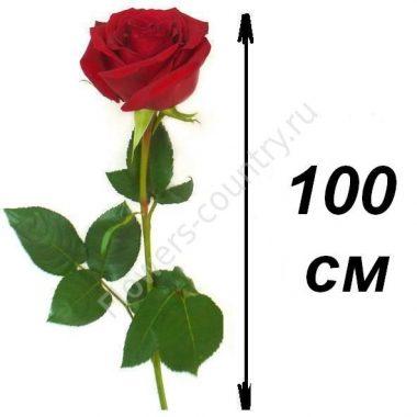 Розы 100 см
