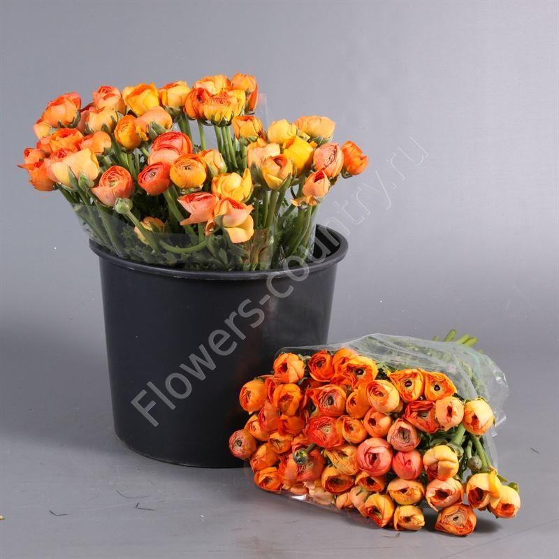 Букет оранжевых ранункулюсов в ведре