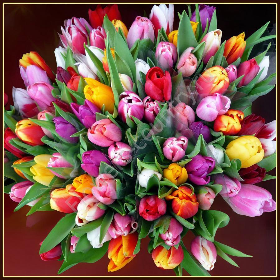 Букет из 49 разноцветных тюльпанов