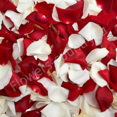 Лепестки белых и красных роз